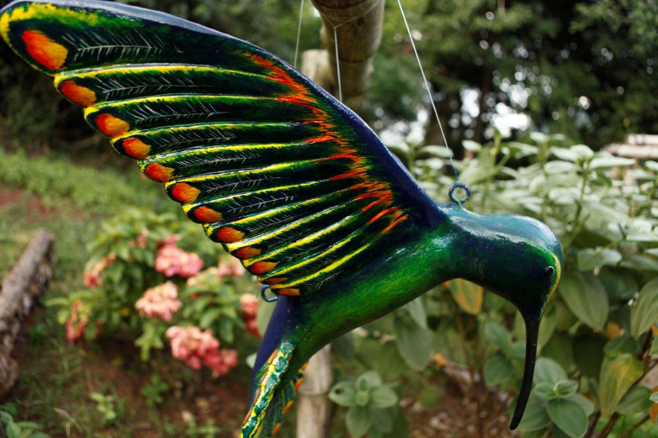 Simon's Hummingbird