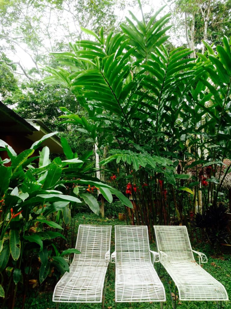 Loungers outside of Okopua to relax and let the jungle in