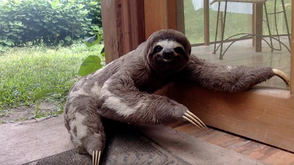 Dave the Sloth comes to visit every once in a while